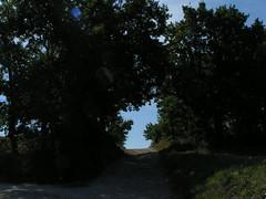 20080916 38054 1017 Jakobus Weg Bäume Durchgang - Photo of Pern