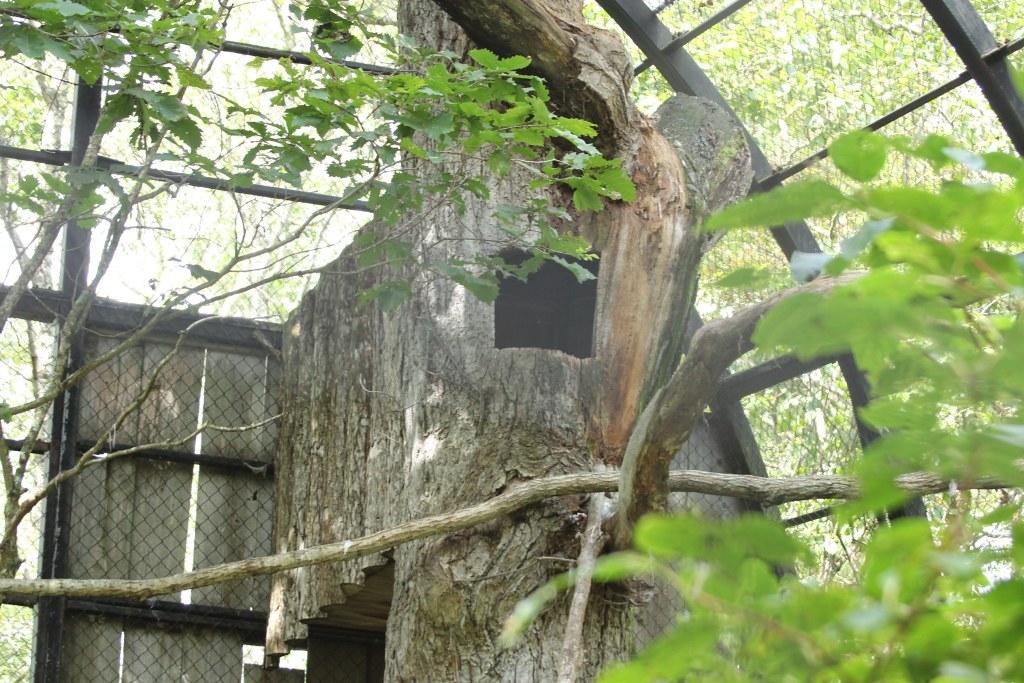釧路市動物園2012