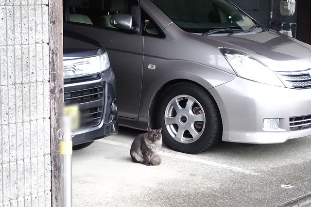 Today's Cat@2019-01-09
