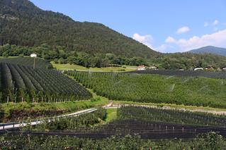 Weinberge oberhalb von Lana