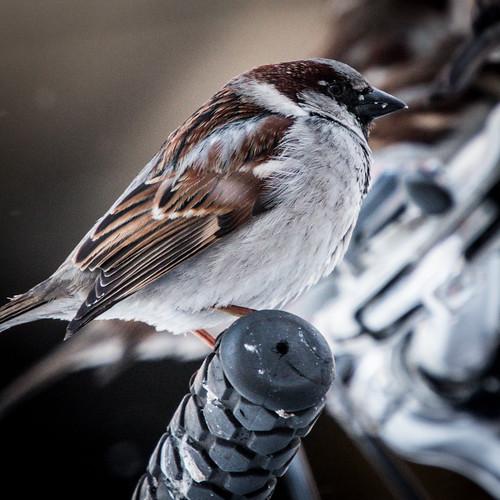 Birds on State Street