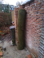 De boomstam op z'n plek