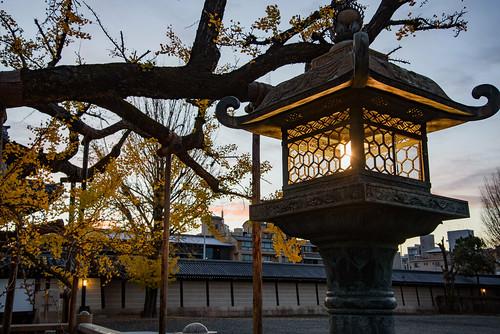 japan kyoto 京都府 西本願寺 寺院 temple 紅葉 autumnleaves イチョウ 世界遺産 worldheritage 日の出 sunrise