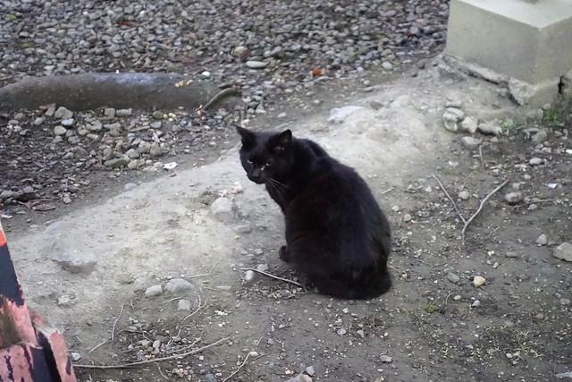 Today's Cat@2019-03-23