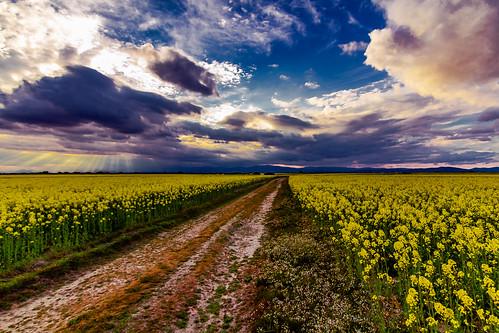 Clouds in a Sunset and Rape until it reaches the view ........, Nubes en un Atardecer y Colza hasta que alcanza la vista........