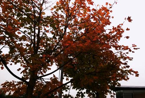 autumn-orange_30168004202_o