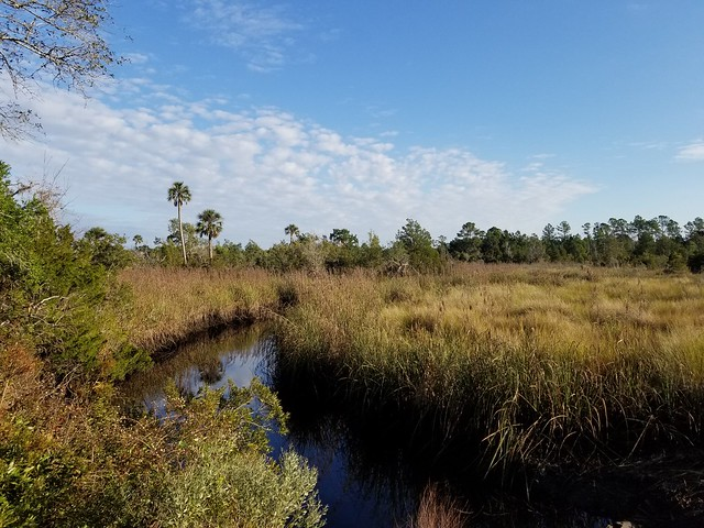 Seaton Creek Historic Preserve. Jacksonville,  FL.