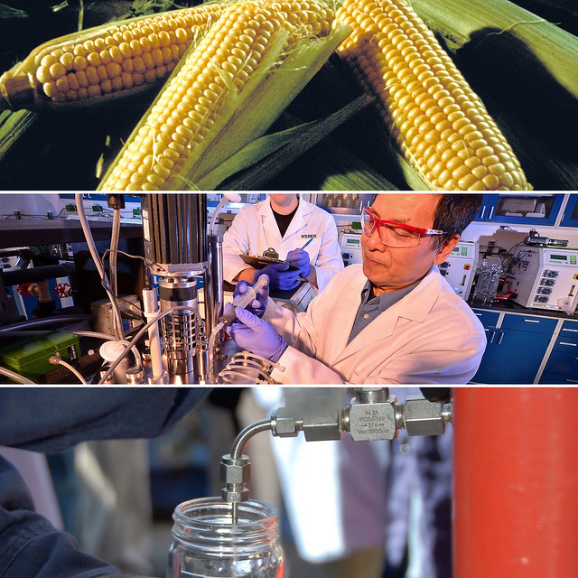 A collage of corn, scientists and a man holding a jar of ethanol