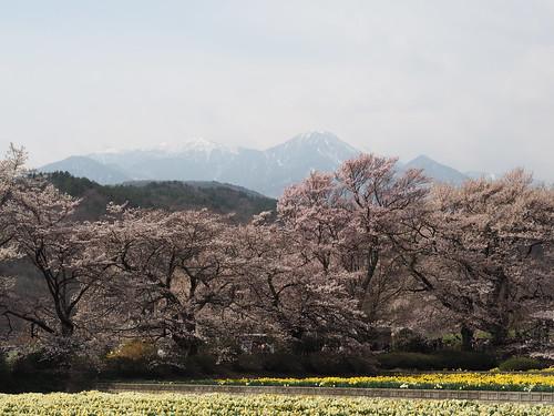 Yamadaka Jindai