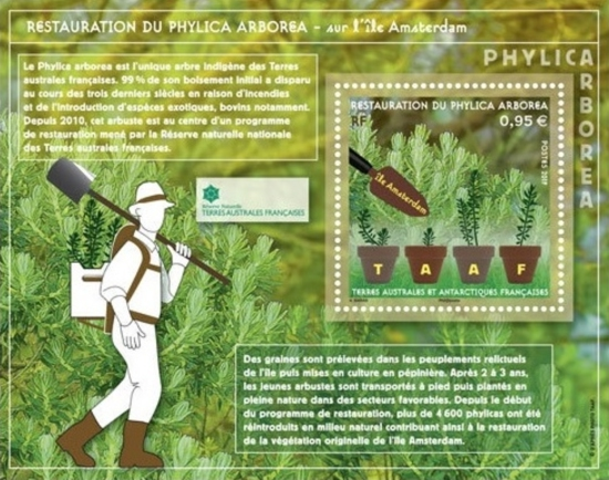French Southern and Antarctic Lands - Restoration of Phylica Arborea Trees on Amsterdam Island souvenir sheet (January 2, 2019)