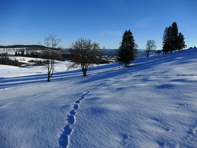 Winter 2019 Gibelegg