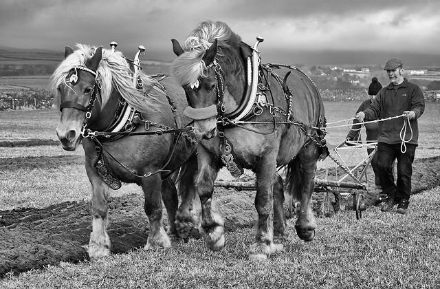 Working Horses