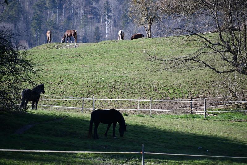 Horses 26.03 (5)