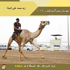 صور سباق الهجن التراثي  - مهرجان سمو الأمير المفدى صباح  5- 4-2019
