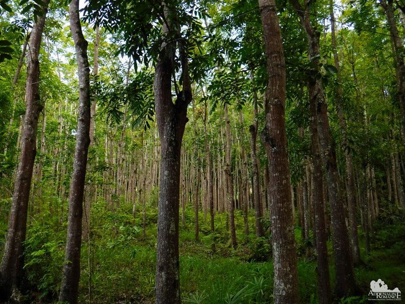 DENR Reforestation area