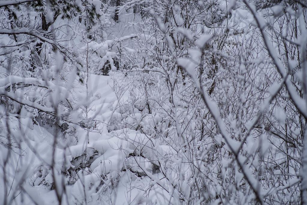 Сон под снежным одеялом.