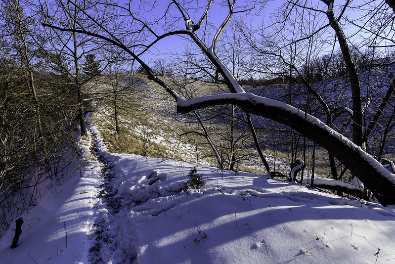 The Trail Up to The Ridge