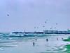 Seagullic Shore