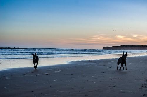 Perros Surfers