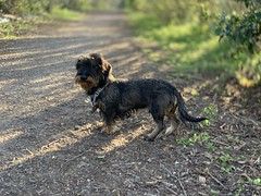 Iphone XS - Photo of Tilly-la-Campagne