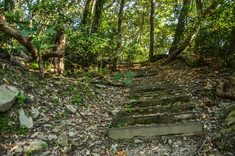 知本森林遊樂區榕蔭步道 (5)