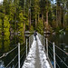 Sasamat Lake Floating Bridge by SonjaPetersonPh♡tography