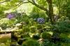 Photo:Sanzen-in, Shuheki-en (Garden) -1 (April 2018) By Tetsuhiro Terada