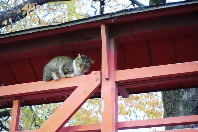 Today's Cat@2019-01-06