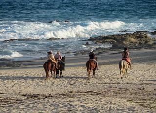 En las playas de Los Cabos B.C.S. México.