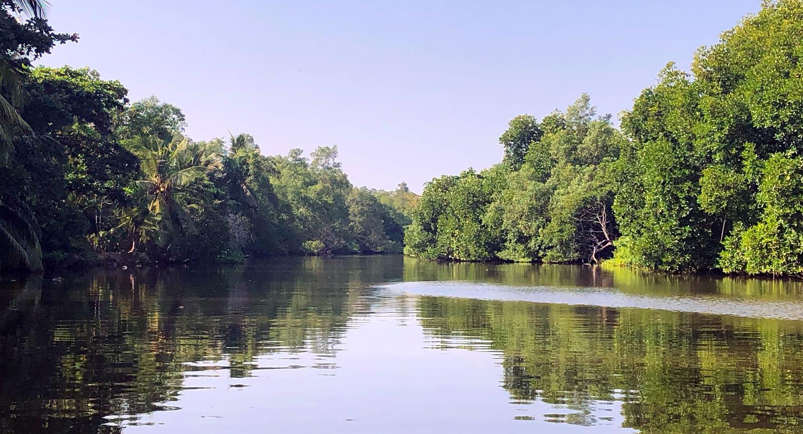 Qué hacer en Unawatuna, Sri Lanka qué hacer en unawatuna - 47083316262 bf5fe5341d h - Qué hacer en Unawatuna, el paraíso de Sri Lanka