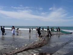 Vissen in Gambia