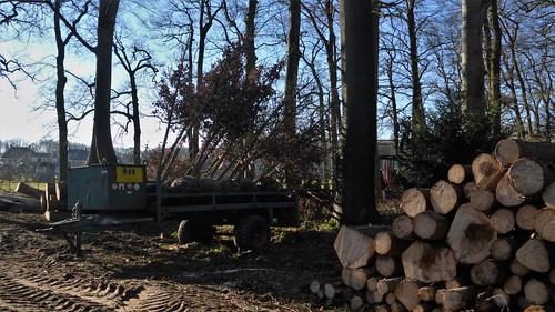 Forestry Bakkeveen Slotplaats