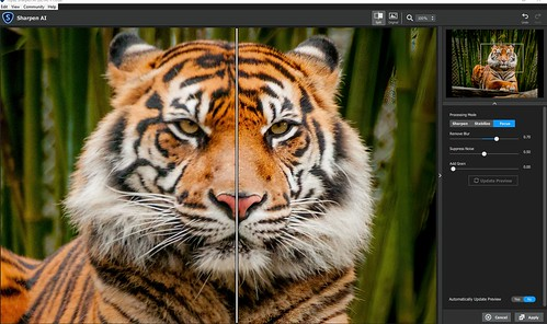 Image of Tigress using the Topaz Sharpen AI plugin