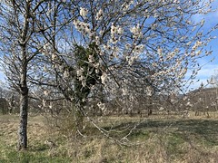 2019-04-06-Loulle-03