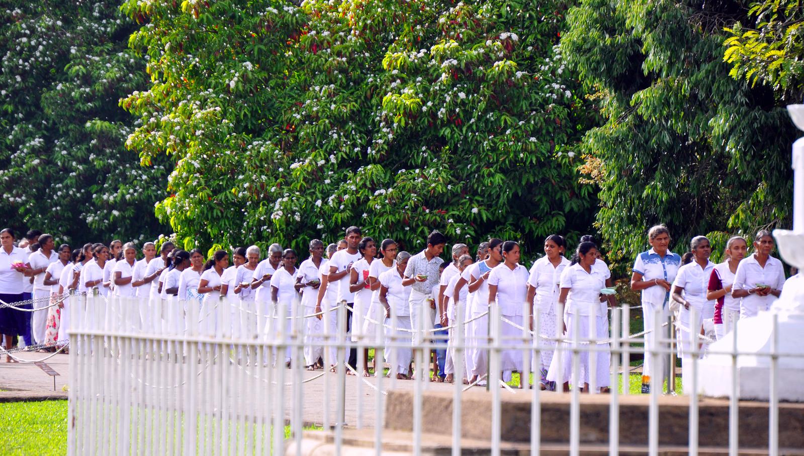 Kandy en un día, Sri Lanka kandy en un día - 32123789477 1eccc090a1 h - Kandy en un día, Sri Lanka