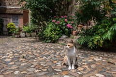 Courtyard cats - Photo of Saint-Gilles