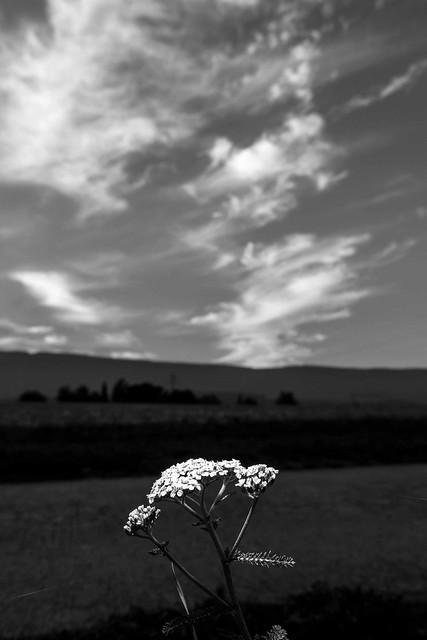 Paysages-Nuée Oiseaux Wavre_011, Canon EOS 80D, Sigma 18-35mm f/1.8 DC HSM