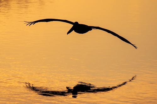 outdoor water nature wildlife 7dm2 ef100400mm canon florida bird