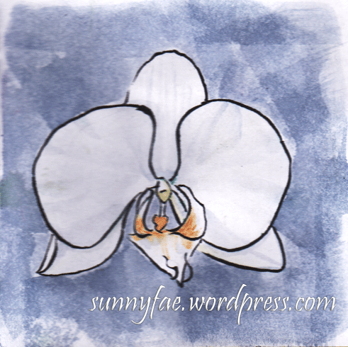 white orchid on a blue background