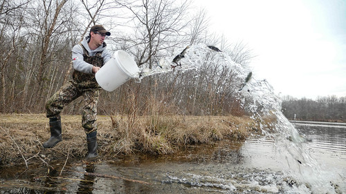 Photo of staff stocking creek with trout