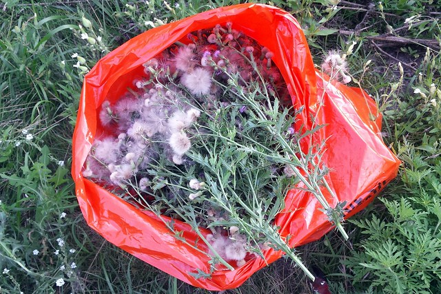 An orange plastic bag full of thistles.