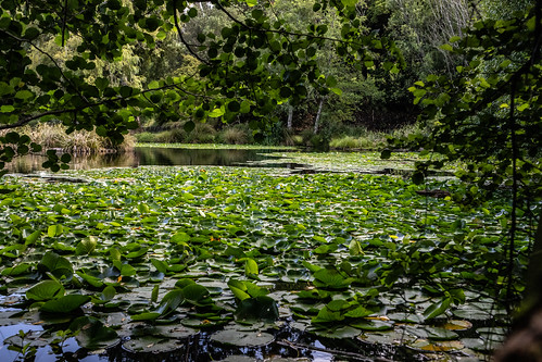 whanganui basonbotanicgardens newzealand manawatuwanganuiregion nz