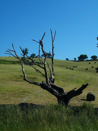 20090603 052 1113 Jakobus Baum Holzkunst Heuballen_K