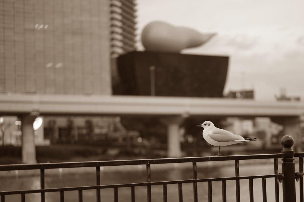 sea gull & town