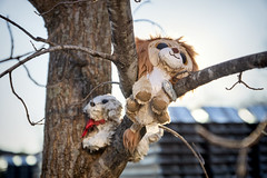 Dolls in A Tree