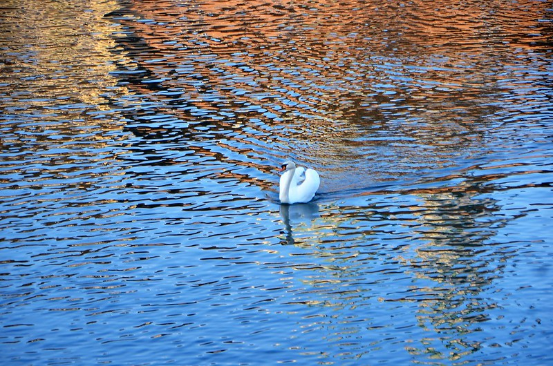 Swan 19.01 (2)