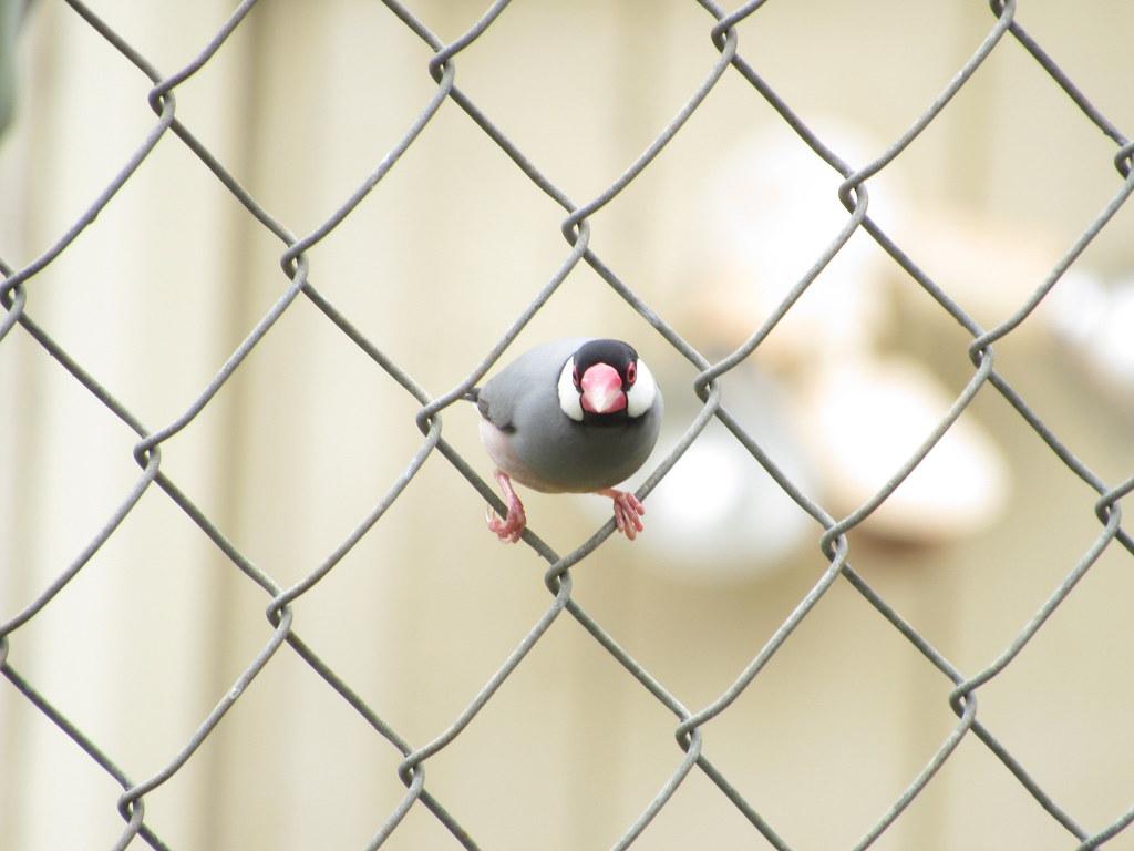 Java Sparrow 8/24/18