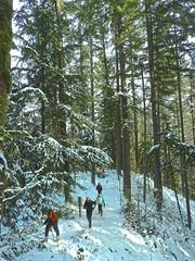 Crossing Big Tree Ridge