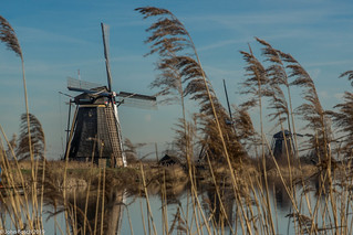 The windmills at Kinderdijk (NL)