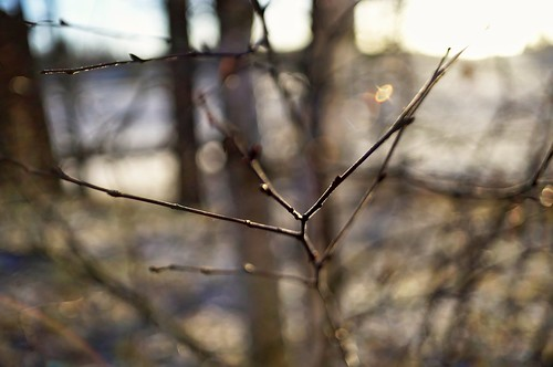 Backlight branches